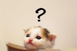 はてなを付けた猫の写真